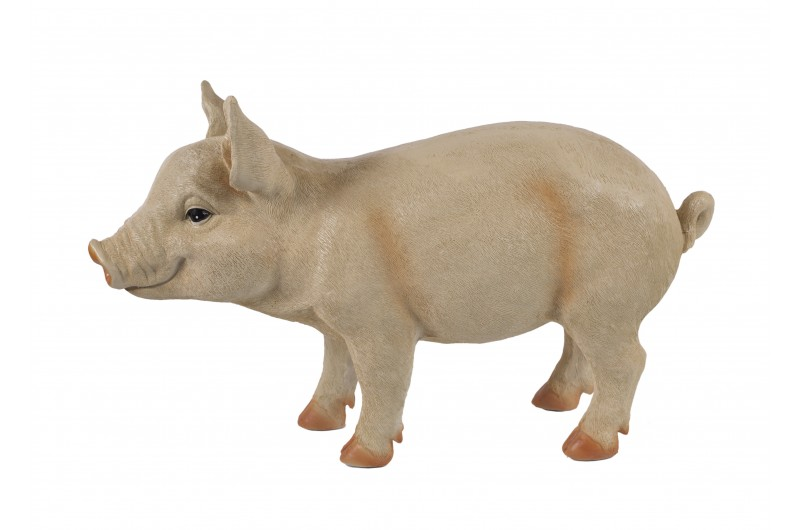 4497 thickbox default Standing Pig