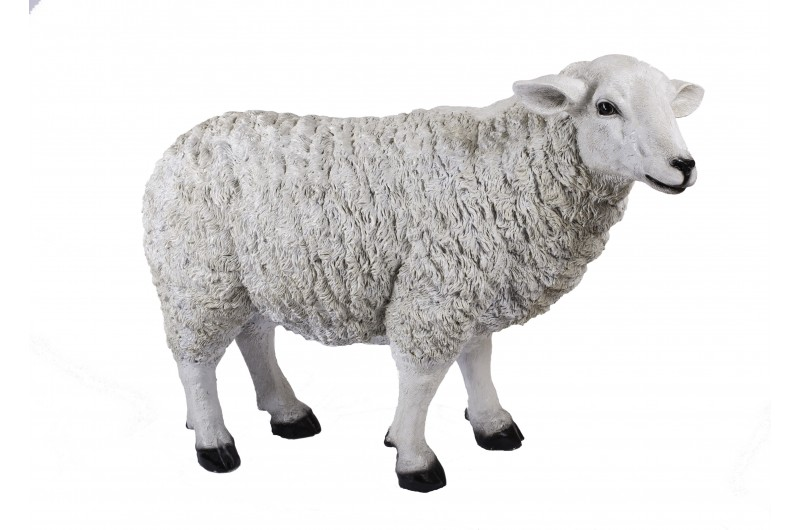 4502 thickbox default Large Sheep
