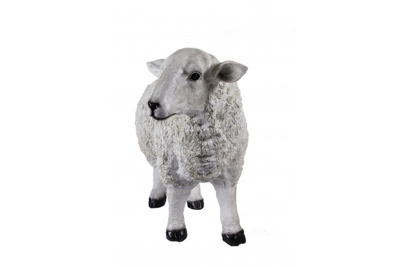 4503 thickbox default Large Sheep