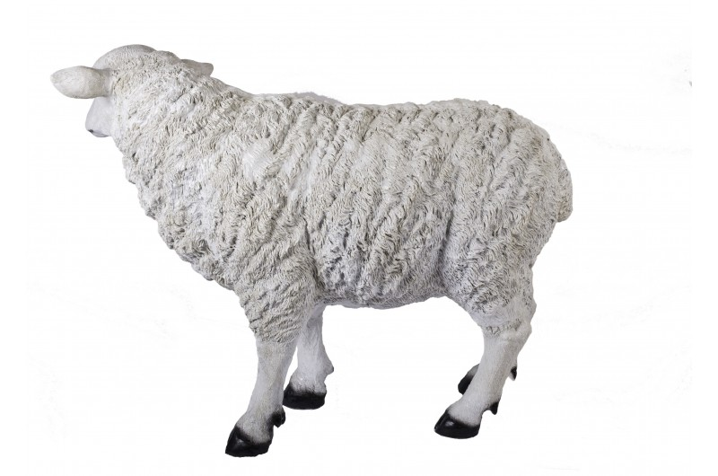 4504 thickbox default Large Sheep